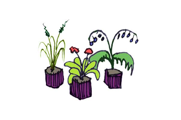 pp_services_plantes-offertes